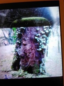 albero_su